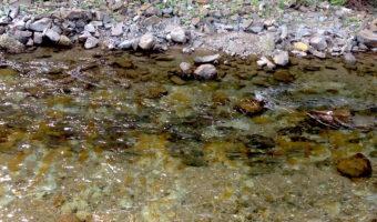 オンネベツ川でサケの遡上を見学(オンネベツ川鮭鱒観覧施設)