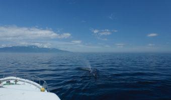 「クジラ観察」で世界遺産を学ぶ(Whale-watching programs)