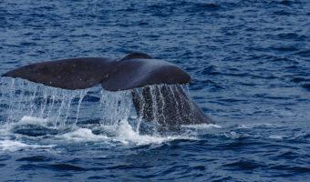 知床で確実にクジラを見る方法は?